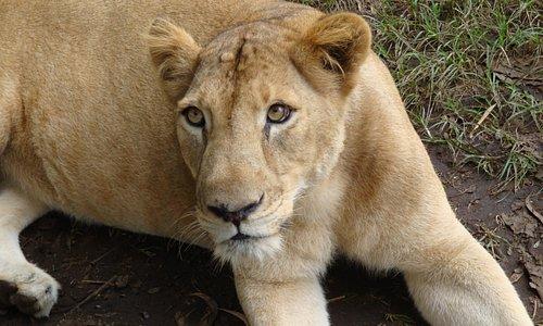 Lion Safari - Neyyar