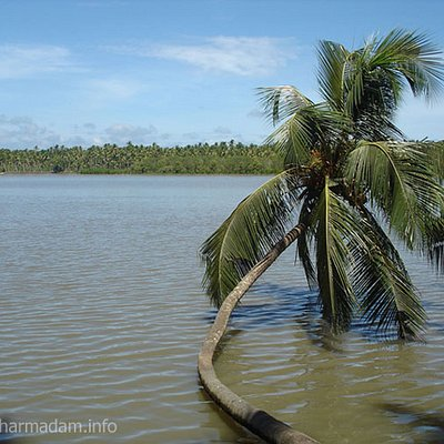 Coconut Tree on River side