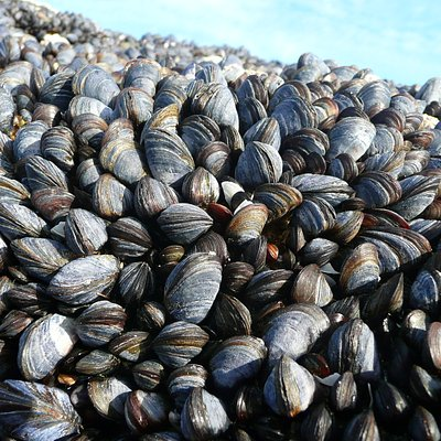 Mussels on beach