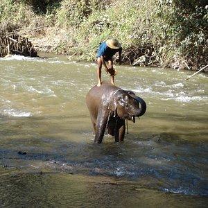 Chiang Dao Elephant Training Centre