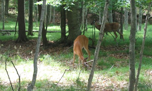 deer on the bike trail