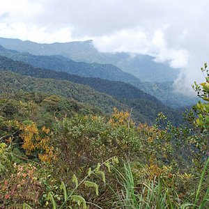 The Peak of Pine Tree Hill