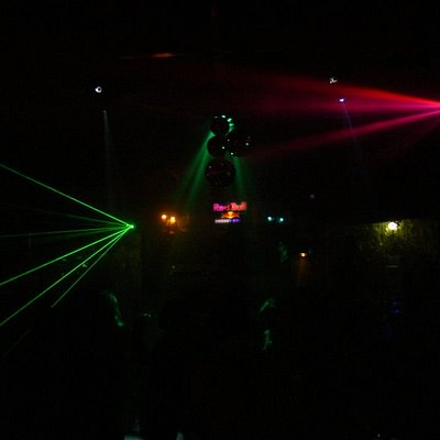 the jungle lights