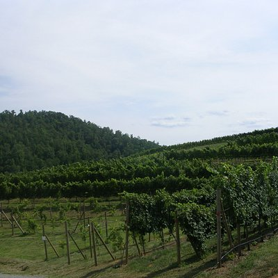 View of vineyards from outside sitting area