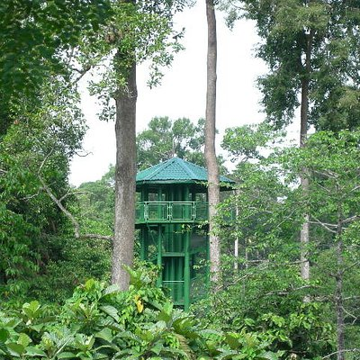 One of the canopy towers
