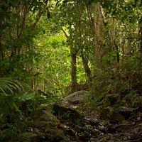 Sage Mountain Trail