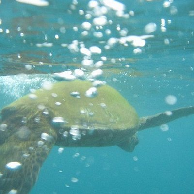 Yeah, I swam with an endangered sea turtle in the wild...  it was awesome!