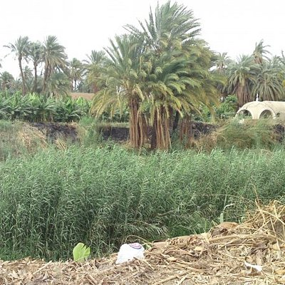 Sopposedly the canal where Moses was placed in the reeds
