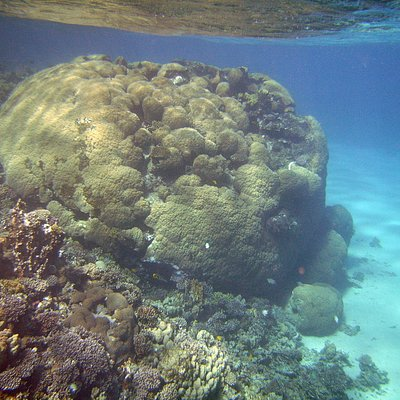 Duna reef on the front of camp Fairuz