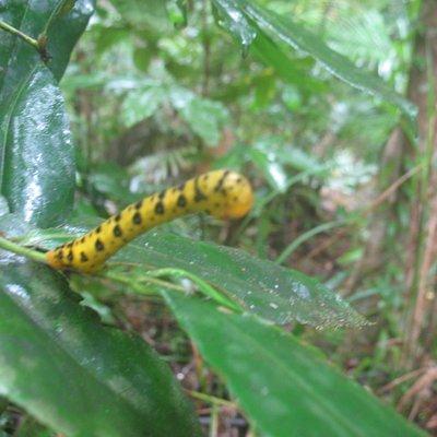 Our Rainforest friend