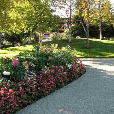 some flowers in the park in September