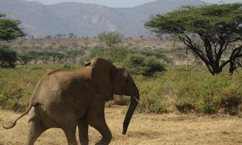 Chasing an elephant;)