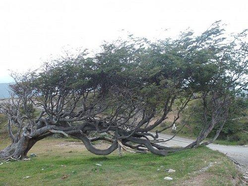 albero bandiera...nn tira mai vento!!!!!!