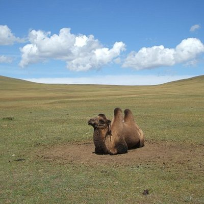 """Camels don´t have names there - this one I called """"king""""."""