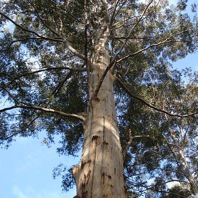 climbing pegs spiralling around tree