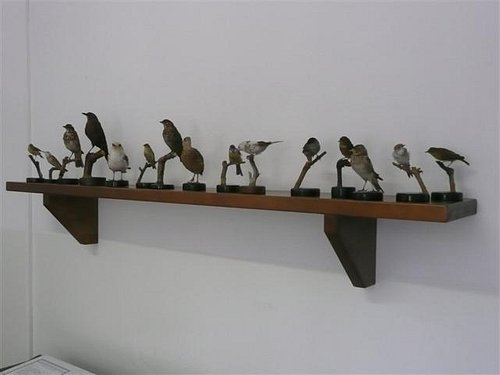 Ornithology and Natural Science Museum, Varenna