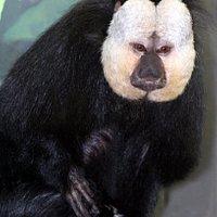it was fun monkeying around at the Potawatami zoo