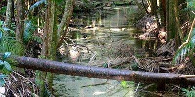 sand rainforest stream