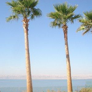 Ishtar - Dead Sea