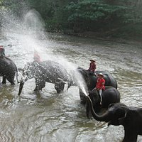 Elephants bathing and we got wet as well!