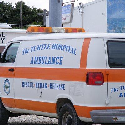 Turtle ambulance