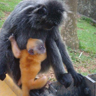 the golden baby monkey :-D