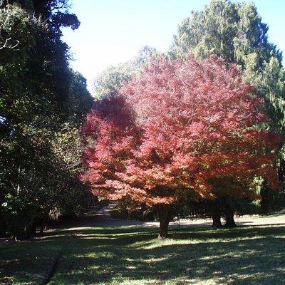 El Parque Anchorena