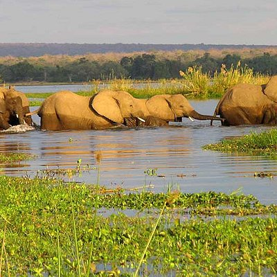 The Elephant Crossing Okavango Delta