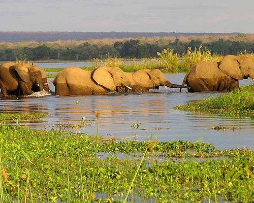 The Elephant Crossing Okavango Delta