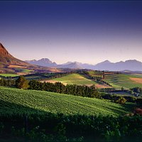 View on the 'BIG 5 WINE SAFARI'