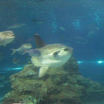 laqaurium !! lisbah aquarium li qatt rajt !! :D