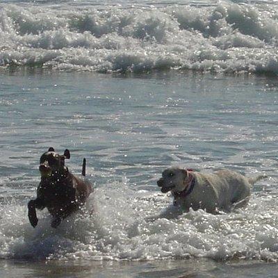 Gunner & Roxy at Huntington Dog Beach