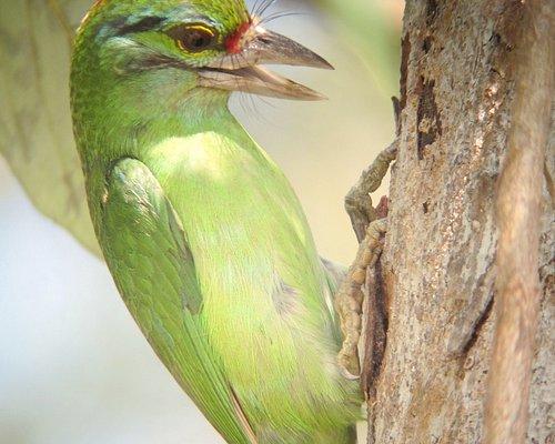 Khao Yai bird photo taken by