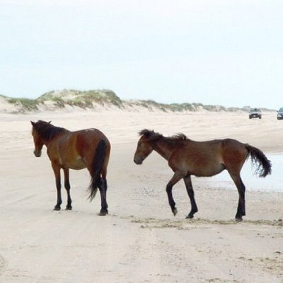 Corolla, OBX: You can get a tan, drive on the beach and meet with wild horses -- awesome