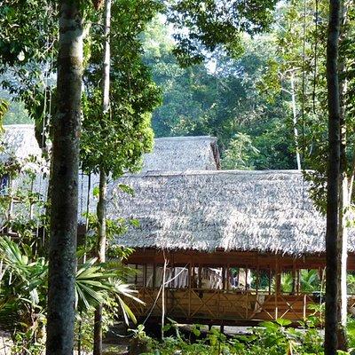 Yacu Puma Jungle Camp
