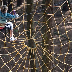 In the spider net.