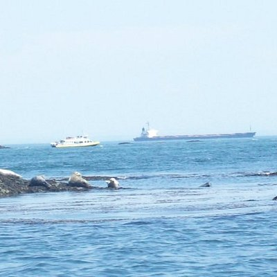 Harbor Seals in Victoria Canada (we went whale watching)