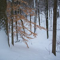 Snowy Mt Airy Forest