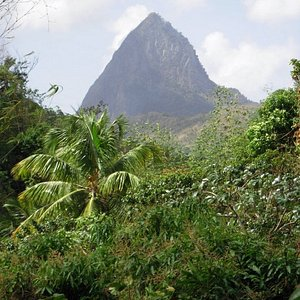 view of piton from the botanical gardens