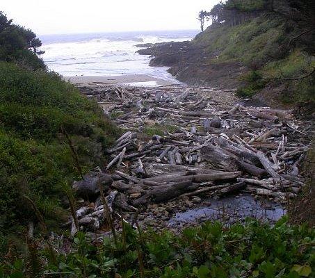 Driftwood & beach near the Devil's Churn