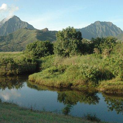 Kawainui Marsh with Ko'olau Mountains in back