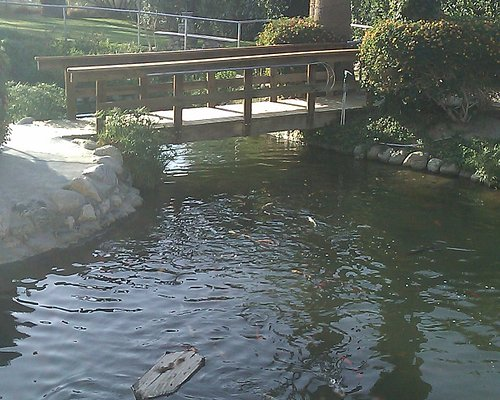 Huge Waterfall, Koi and Turtle pond