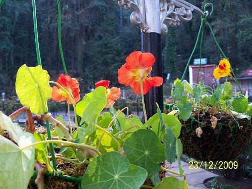 Exotic florals in Company Garden
