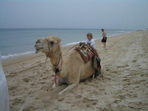 休憩所ではラクダに乗ることもできます(有料)。