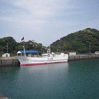 この日は一隻だけまぐろ漁船が帰港していました。