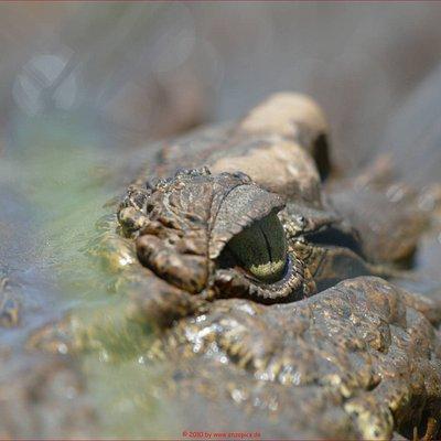 always one eye open, koorana-croc-park, aus