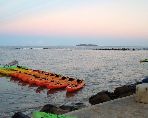 Yokahu kayaks ready to take us exploring with the dinoflagellates