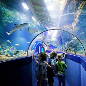Experience Leopard Sharks swimming over your head!