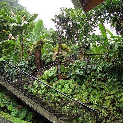 entrance to Papillote Tropical Gardens