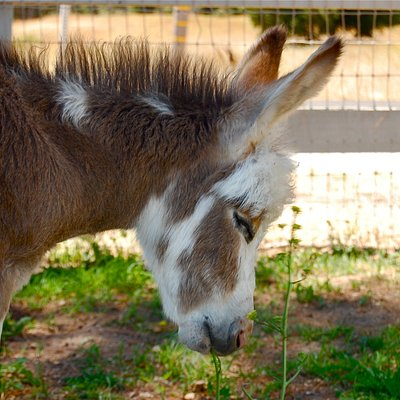 The cutest baby donkey!